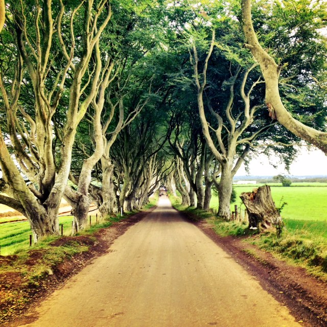 game-of-thrones-dark-hedges